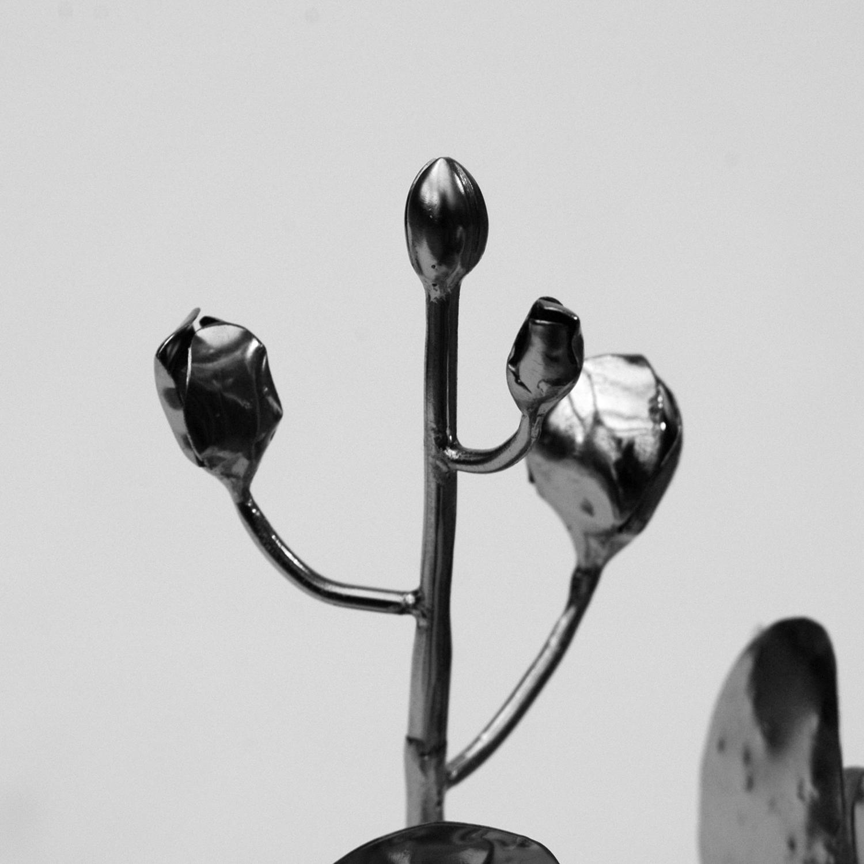 Phalaenopsis_01