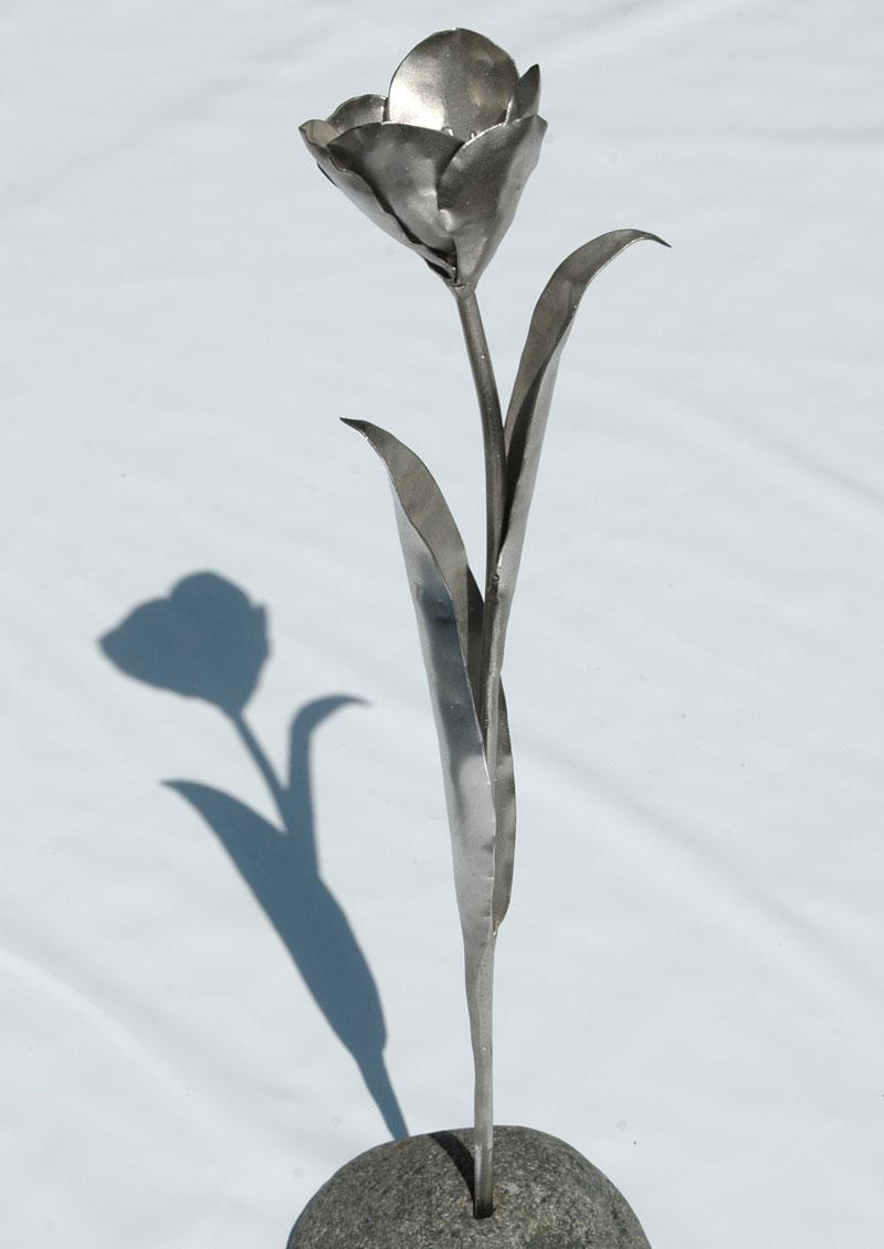 Tulpen (15)