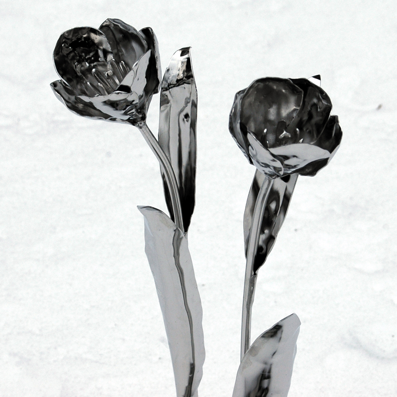 Tulpen (5)