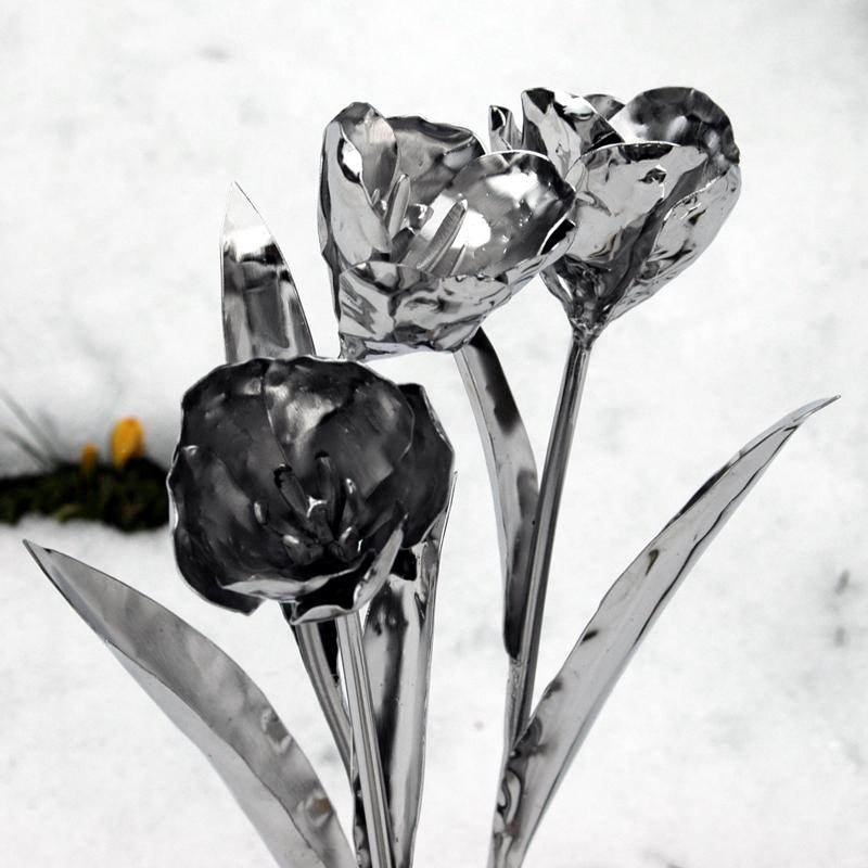 Tulpen (7)