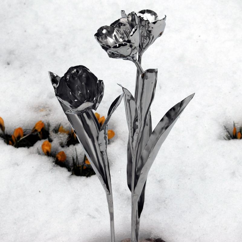 Tulpen (8)